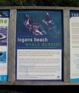 Whale sign Logan's beach July 2010